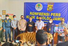 Photo of Gakkum KLHK Tangkap Penjual Opsetan Harimau Sumatera dan Gading Gajah